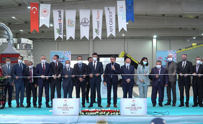 Türkiye'nin en büyük ceviz işleme fabrikası açıldı!